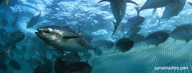ikan-tuna-650x250